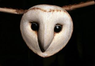 Jan Zalud - Creating Magic from wood